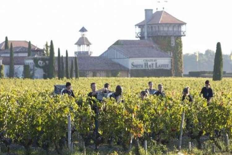 Wine Chateau Smith Haut Lafitte Bordeaux France