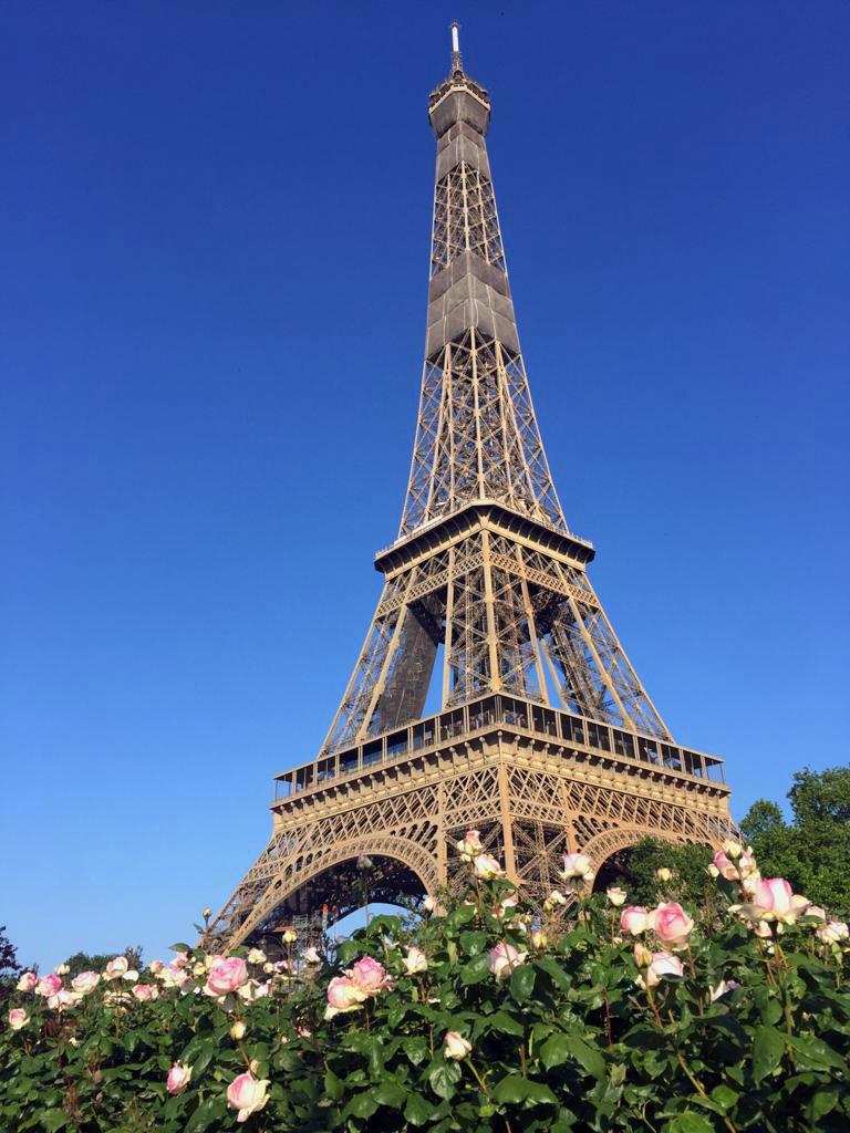 Tour Eiffel et rosier